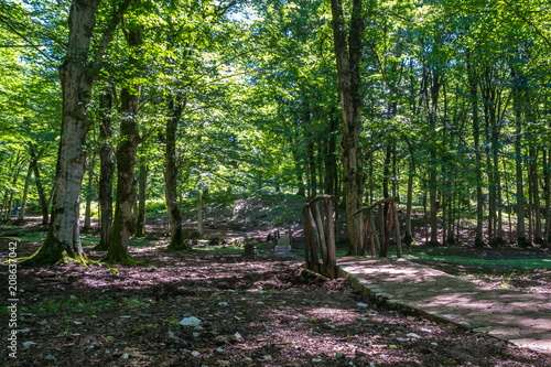 Fotobehang Weg in bos Zeda-gordi, Georgia. View Of Paved Forest Path and wooden bridge Leading To Canyon Okatse