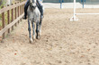 Learning Horseback Riding. Instructor teaches teen Equestrian. - 208645202