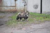 cat - 208646488