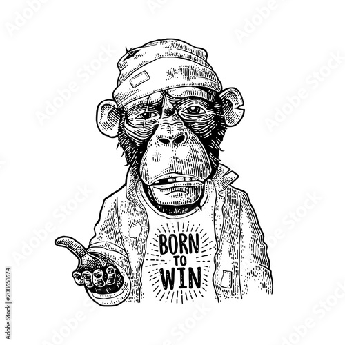 Fototapeta Monkeys begging. Lettering BORN to WIN. Vintage black engraving