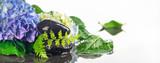 Wellness, Blüten, Blätter und Steine im Wasser, Panorama, Hintergrund - 208653661