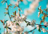 spring branch with white flowers - 208665452