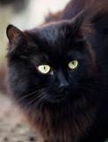 Street black cat sitting - 208665459