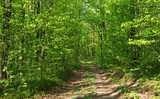 Forest trees. nature green wood sunlight backgrounds - 208668683