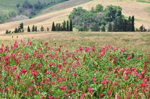 Toskana-Landschaft bei San Gimignano (Itlaien) © Buesi