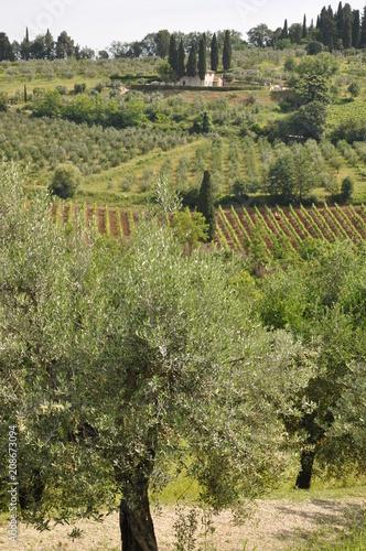 Aluminium Toscane Toskana-Landschaft bei San Gimignano (Itlaien)