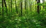 Forest trees. nature green wood sunlight backgrounds - 208674051