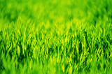 green grass background with selective focus - 208674081