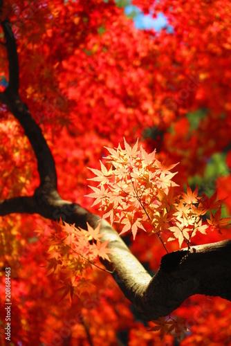 Aluminium Rood traf. 晴れの湖畔の公園の秋の風景9