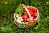 wild strawberries in basket - 208687608