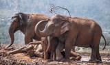 Elephant water - 208688030