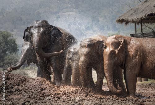 Fotobehang Thailand Elephant bath time