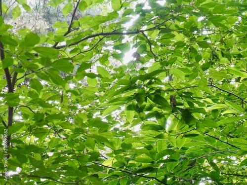 Foto Murales 녹색 잎사귀
