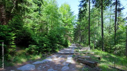 Fotobehang Weg in bos Leśnym szlakiem przez Karkonosze, kamienna ścieżka w polskich górach, Sudetach