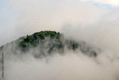View of mountain forests covering by fog - 208703445