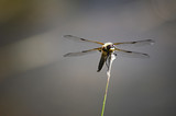 Dragonfly 2 - 208707650