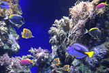 Underwater scene with tropical fish - 208716228