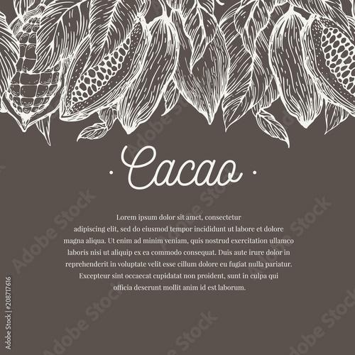 Szablon transparent drzewa kakaowego. Tło kakaowe czekoladowe. Wektorowa ręka rysująca ilustracja. Styl Vintage ilustracji.