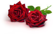 Leinwanddruck Bild - Blumen 937