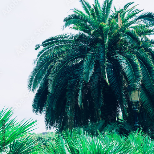 Exotic tropical palm tree. Minimal Summer nature - 208721012