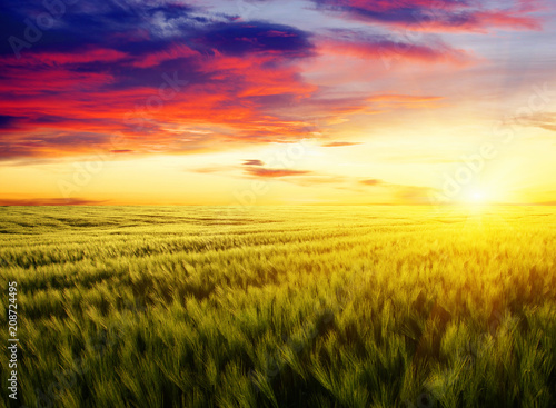 Fotobehang Geel Sunset on the wheat