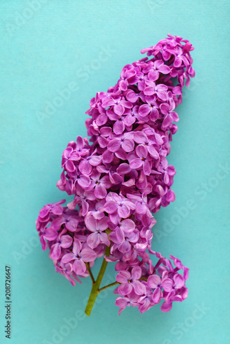 nice lilac flowers