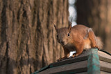 squirrel peeps out of the house - 208730208
