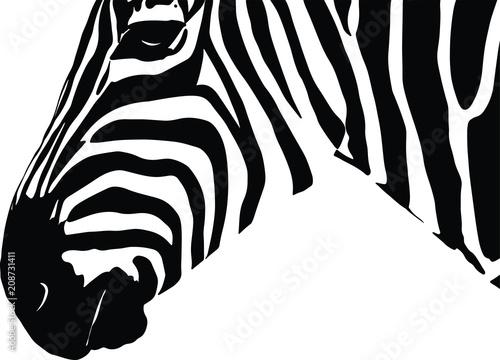 Zebra Vector Gesicht Kopf von der Seite