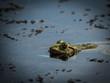 Sunbathing Toad In Water