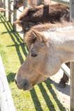 馬のポートレート - 208746027