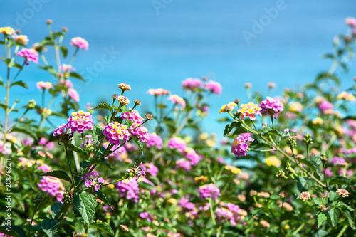 Fotobehang Cyprus Background sea and flowers.