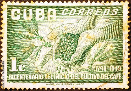 Coffee berries on vintage cuban postage stamp