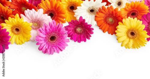 Foto Spatwand Gerbera Gerbera flowers isolated on white background