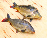 Traditional food for christmas table in Czech Republic and Poland. The Common Carp - Cyprinus Carpio. Fishing catch. - 208790412