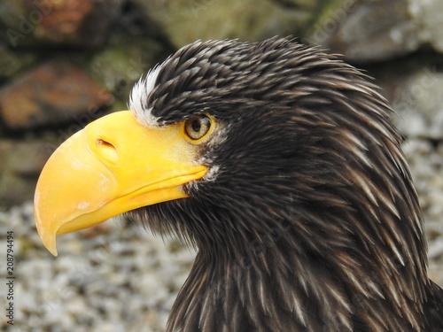 Plexiglas Eagle Auge um Auge mit den Adlern