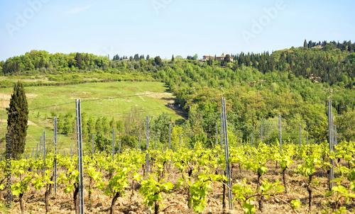 Aluminium Toscane Tuscany vineyards in Chianti region, Italy