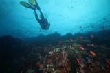 Female Scuba Diver and Colorful reef fish blue ocean and bright coral underwater - 208810845