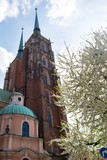 Wroclaw.Poland.The blossoming tree before the old church.
