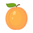 Vector illustration of apricot on white background - 208823849