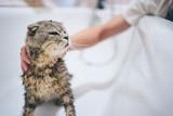 Washing of cute kitty cat in bathroom. - 208828415