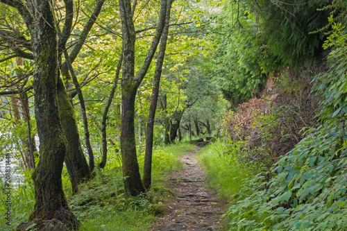 Fotobehang Weg in bos árboles al lado de un camino de tierra