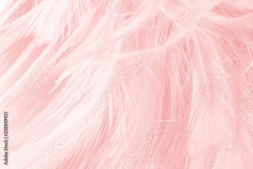 soft pink vintage color trends chicken feather texture background - 208849431