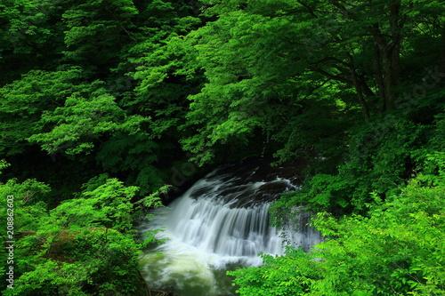 Plexiglas Groene 葛丸渓流 新緑の一の滝