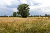 Feldlandschaft mit Baum