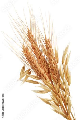 oat plants and wheat ears