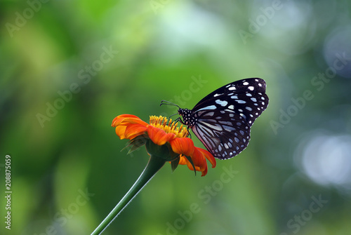 Fotobehang Vlinder butterfly, flower, insect, nature, monarch, macro, garden, orange, summer, green, animal, beautiful, spring, colorful, wings, wing, fly, bug, beauty, wildlife, black, yellow, plant, closeup, leaf