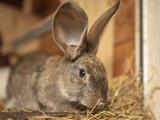 Portrait of a rabbit on a farm