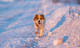 A dog in the rays of a sunset in the snow