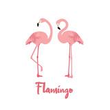 Pink Flamingo birds on white background