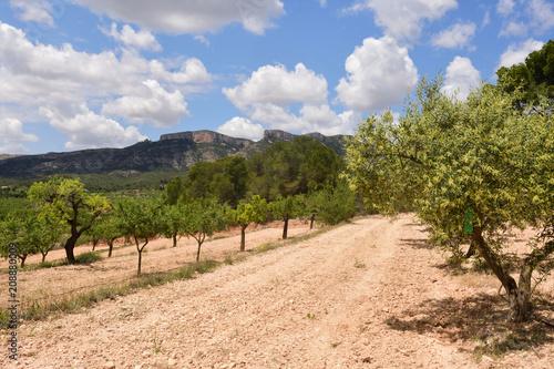 Fotobehang Landschappen landscape of cultivation of fruit trees in the region of Terra Alta,.near Pinell de Brai, Tarrgona province, Catalonia, Spain